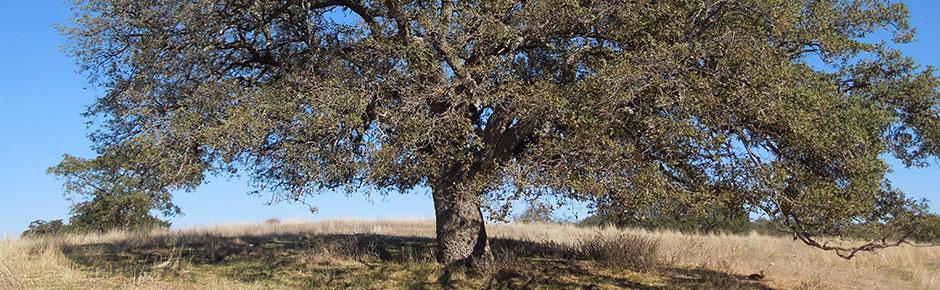 Tree Appraisal