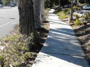 Trees on the street