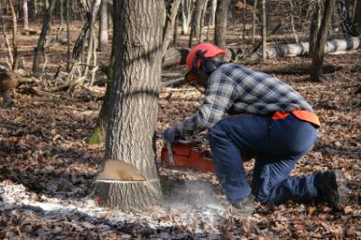 man cutting trees