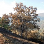 Will Fire Damaged Trees Recover