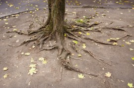tree root care