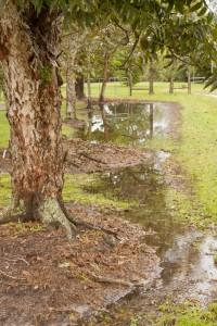 small runoff water