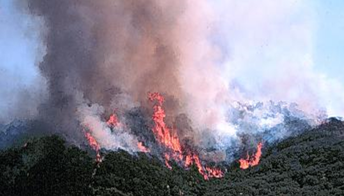 Infrequent, but catastrophic, fires are a natural part of chaparral habitat, as seen in this picture from the U.S.G.S.