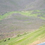 Lodgepole Pine Forest from Cascade Mountain
