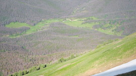 Lodgepole_Pine_Forest_from_Cascade_Mountain