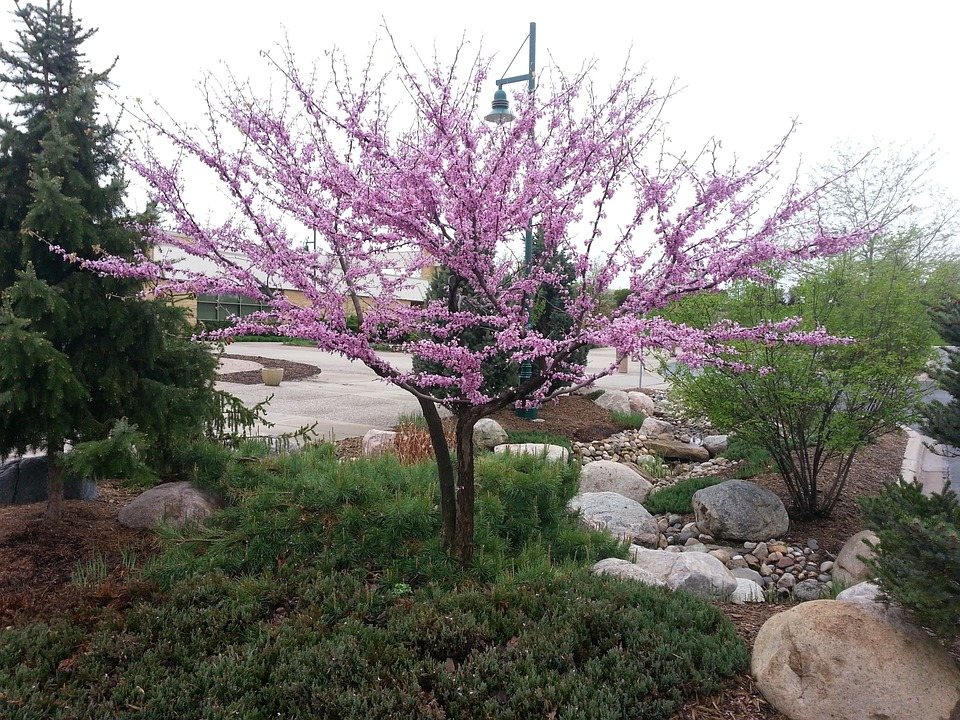 What Are Some Of The Best Drought Tolerant Trees For