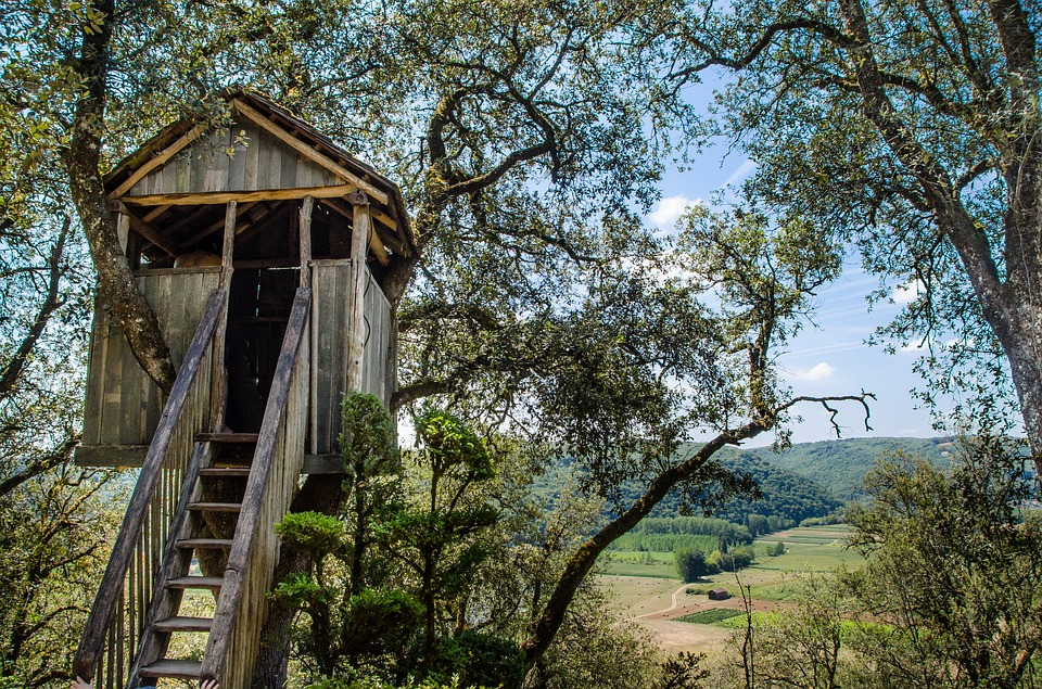 Are Treehouses Safe For Trees Evergreen Arborist Consultants